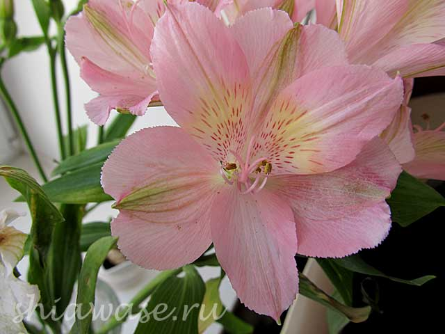 цветы-для-новых-друзей