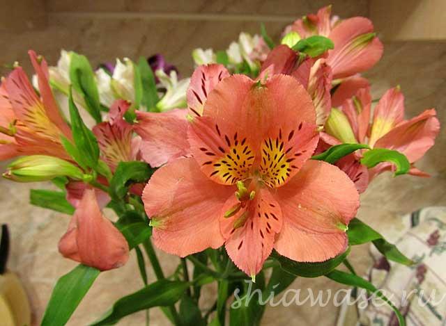 цветы-от-мужа