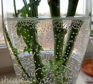пузырьки-в-стакане