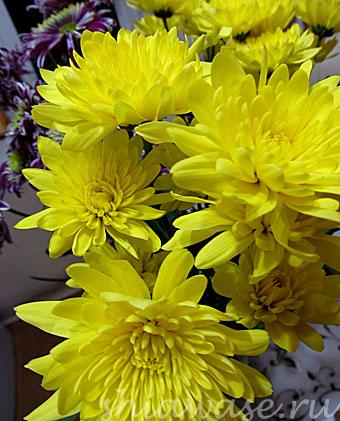 цветы-вокруг