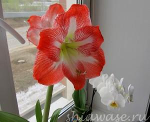 цветы-на-окне