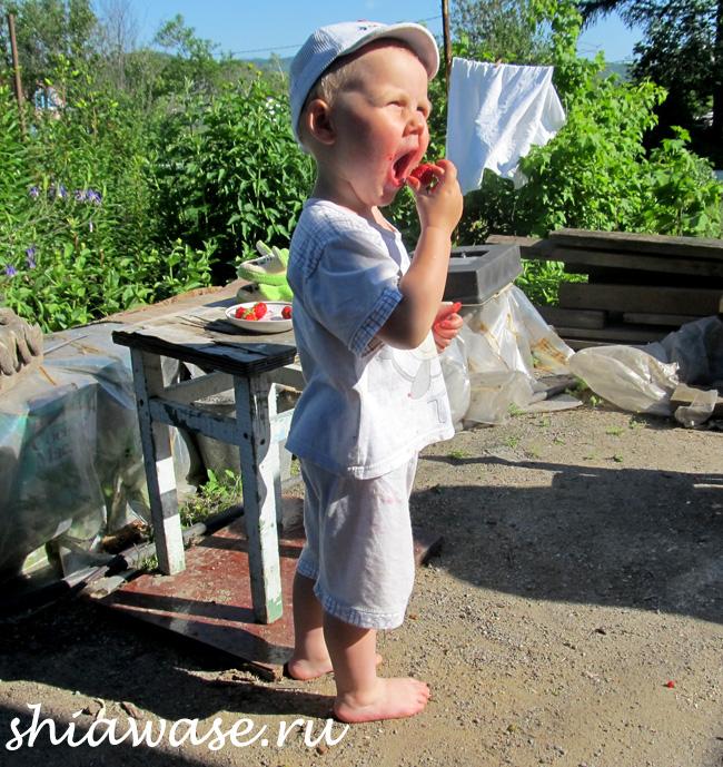 поедатель-ягоды