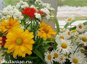 цветочки-на-окне