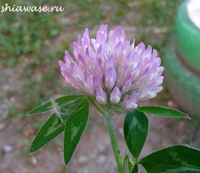 первый-цветочек-от-сына
