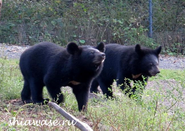 медвежатки
