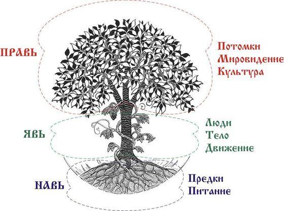 древо предков
