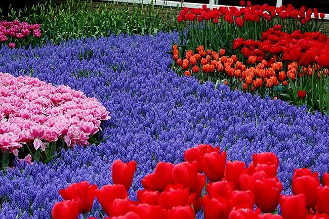 разнообразие-цветов
