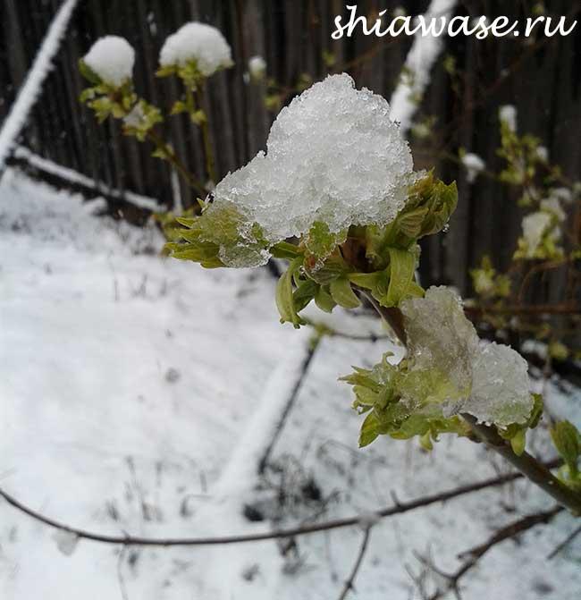снегопад-в-мае