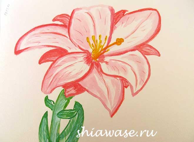 лилия-акварель