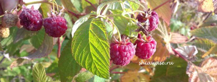 плодотворная осень